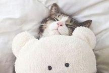 CUTE PETS / Adorable and cute little animals  Süße Tiere
