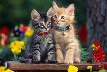 Kitties / Kitties!!! :·3