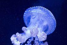 #Ocean #Animal / by Yolanda Glez Glez