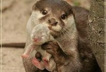 I LOVE OTTERS! / by Dee Moore