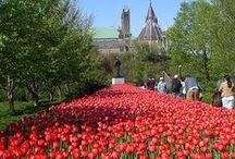 Ottawa / Parce que j'aime tellement ma ville!