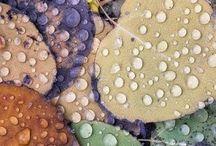 Dewdrops & Rainbows... / Light & Color To Dew / by Shayne Cushman