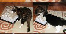 Macskaötletek