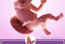 Schwangerschaftswochen / Hier findest du eine Übersicht über alles Mögliche rund um die einzelnen Schwangerschaftswochen. Es geht um die Entwicklung des Fetus und was mit dem Körper der Frau während einer Schwangerschaft passiert.