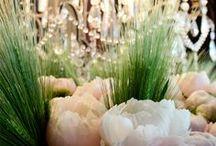 Peony / Flowers