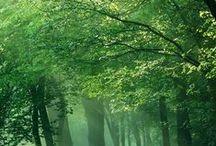 PAISAGENS VERDES GREEN LANDSCAPES44 / GREEN LANDSCAPES