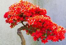Bonsai Beauty / Love Bonsai in all it's elegant forms / by Donna Bosworth