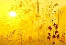 Amazing grace / Beauté éphémère. Joie rayonnante. Instant lumineux.