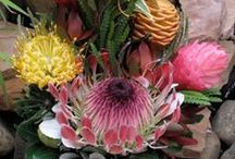 Unusual Protea / Perhaps the ultimate exotic, Protea resemble no other flower. They are grown on the slopes of Haleakala Crater, on the island of Maui. The combination of the intense sun, cold and light mist, supply these wondrous beauties with the perfect conditions.
