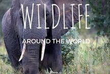 Wildlife Around The World / Where to see wildlife anywhere in the world