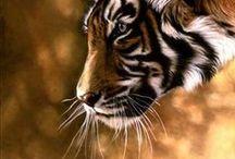 дикие звери/ άγρια ζώα.