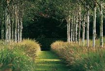 G Cave Ludlow Nice combination of grasses, silver foliage and purple flowers. Good ...