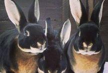 ANYTHING RABBIT / My love of bunnies