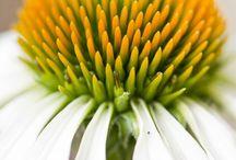 Flowers / Bloemen zoals ik ze zelf zou willen fotograferen