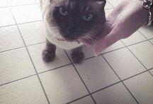 03_cat