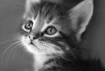 Adorable Animals...!!