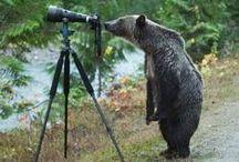 BEARS / Beautiful Bears