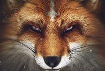 Tattoo/ FOX