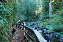 Hiking Hotspots / From old growth forests and quiet canyons, to ancient lava-beds or dramatic cliffs around serene lakes, Lane County has an incredible hiking scene. The joy is in the journey as you note seasonal wildflowers or colorful fall foliage, birds and wildlife.