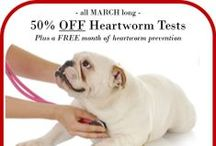Monthly Specials / Past and present Monthly Specials at Family Animal Medicine.