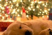 Holiday Cheer! / Pics of pets and animals having some holiday cheer.
