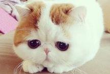 Cutest Little Animals! / Way too cute!