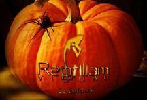 Halloween / Reptiliam también se viste de Halloween.