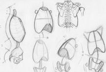 Anatomy/Drawing References