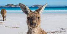 Australien Reisetipps und Inspiration ♡
