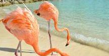 Karibik ♡ Reisetipps & Inspiration