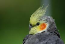 Love That Bird