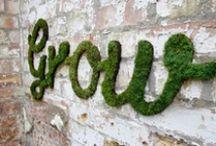 Brilliant Ideas/Gardens