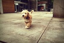Woodinville Wine Dogs / Oh the precious pups of Woodinville Wineries. They guard, they sniff, they taste, they love...