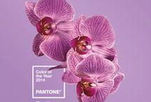 Pantone I Radiant Orchid / Pantone-Farbe des Jahres 2014