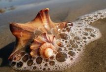ocean / Tema: Naturlig Umdertema: Mitt lille paradis Budskap: Have a litle moment and look around you
