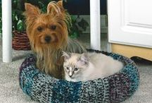 Pets :Treats, Beds & Tips / I created this board and started pinning to help us Pet parents for comfort treats and Health. I hope it helps you too / by Melissa Daine