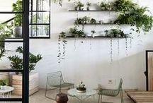 Green Ideas - Garden