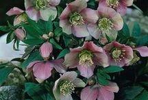 Kwiaty Ani