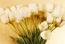 Flowers & Arrangements / Bouquets, flowers and arrangements that infuse our world with abundant natural beauty