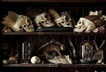 Wunderkammer Stuffs / wunderkammer, curios, cabinet of curiosities, skulls, natural history, occult