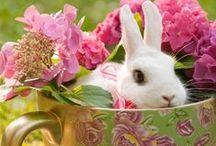 Húsvét*Easter