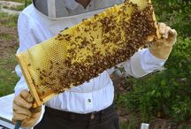 Bees & Honey / Beehives, how to look after bees, honey and bee products. / by Grow Cook Bake