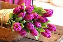 Csokrok*Bouquets