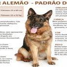 Raças Caninas