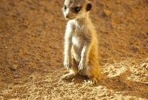 Explorers of Africa & Wildlife!