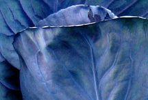 BLUE / pretty shades of blue