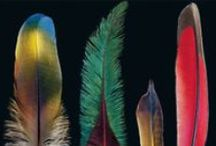 Feathers - A Natural Miracle