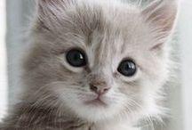 ⊛ Felidae ⊛