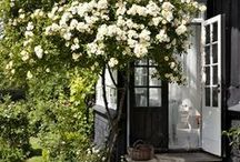 Garden / by Belinda