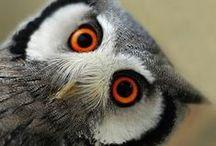 Birds Owles / by Deborah Spiller